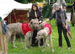 Irisch Wolfhounds