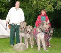 Irish Wolfhounds II