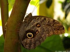Tropischer Schmetterling III