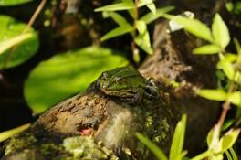 Froggy II