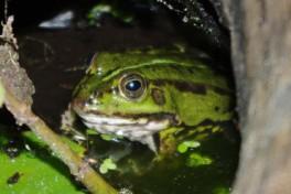 Frosch 2009 - I