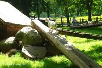 Raisdorf - Wildpark 6566