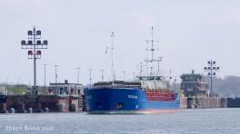 dolfijn-ms-4223