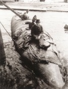 U-Boot Baunummer 333