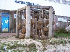 Amrum-Naturzentrum-3319