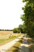 Feldweg - H1860