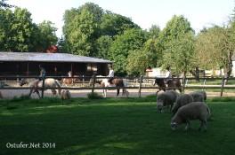 Prasdor - Ponyhof Sye I